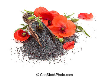 Poppy flower and poppy seed in wooden scoop. Isolated on white background.
