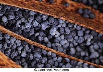 poppy seeds texture