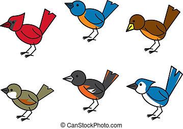 populär, vögel