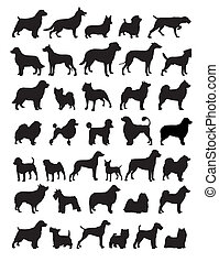 populaire, chien, espèces