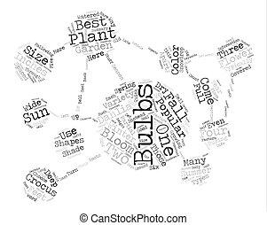 populaire, fleur, ampoules, mot, nuage, concept, texte, fond