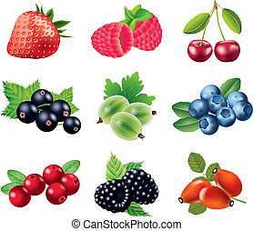 popular berries photo realistic colorful vector set