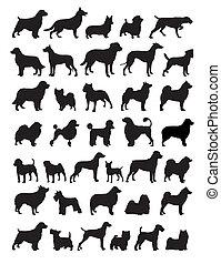 popular, cão, raças