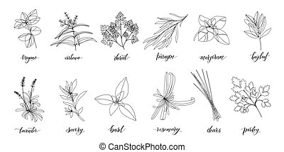 Popular Culinary Herbs and spices big set. Isolated objects. Vector flat illustration. For health care, store, cosmetics, health care, food design