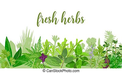 Popular Realistic herbs and flowers with text set in green color Peppermint, lavender, sage,
