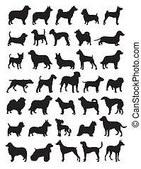 popular, silhuetas, cão, raças