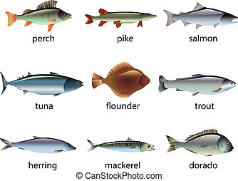 popular species of fish vector set - popular species of fish...