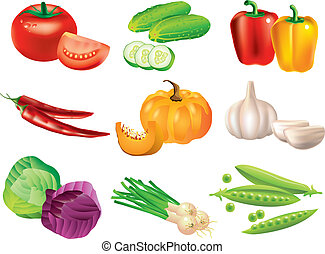 popular, vegetales, vector, conjunto