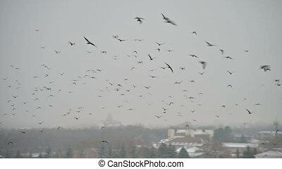 population, endroit, troupeau, mouches, secteurs, contre, nuageux, oiseaux, concept, sur, jour, corneille, petit, secteur, augmenter, résidentiel, gris, privé, sky., corbeau, ville