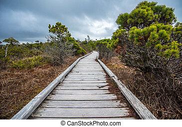 por, boardwalk, pantano, largo