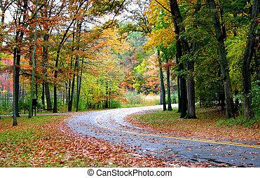 por, bosque, camino