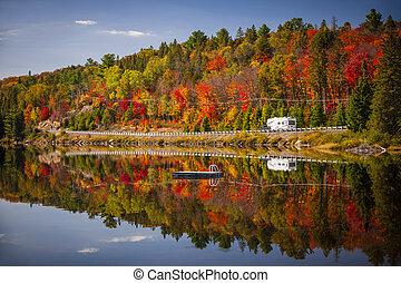 por, bosque, carretera, otoño