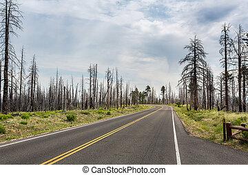 por, camino de asfalto, deadwood