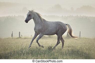 por, corriente, caballo blanco, manchado, pradera
