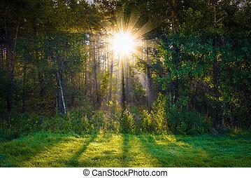 por, sol, árbol, rayo