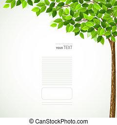 pora, drzewo