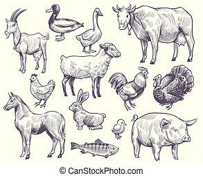 porca, birds., cavalo, peixe coelho, galo, sheep, mão, fazenda, pato, cabra, ganso, vaca, desenhado, jogo, peru, galinha, animais, vetorial