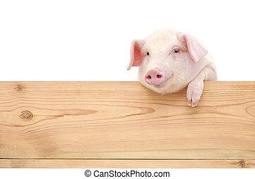 porca, com, tábua