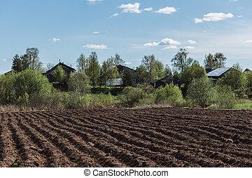 porca, primavera, -, plouged, cores, campo, fundo, vila, pronto