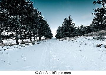 porcellana, inverno, foresta