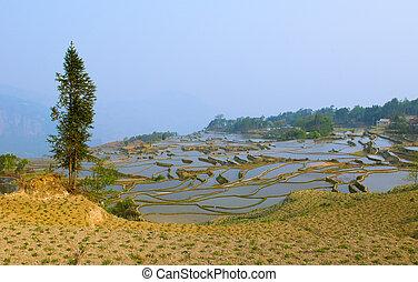 porcellana, terrazzi, yuanyang, yunnan, riso