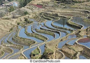 porcellana, yunnan, riso, yuanyang, terrazzi