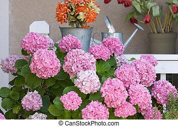 Porch with Hydrangeas - Beautiful Hydrangea Blossoms on...