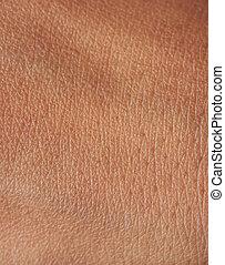 Pores on human skin