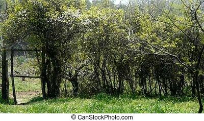 portão, parede, arbusto, cerca, ervas daninhas