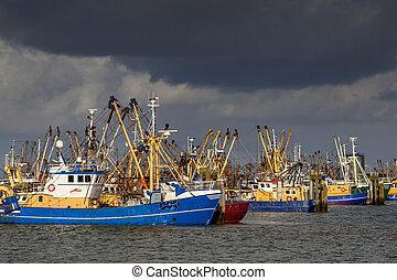 port, łódki,  lauwersoog, wędkarski, Holenderski