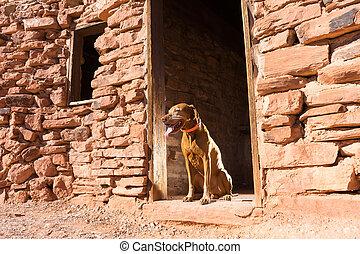 porta, cão, cabana, abertura