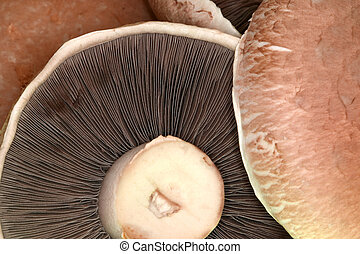 Portabello Mushrooms - Macro frame filling shot of...