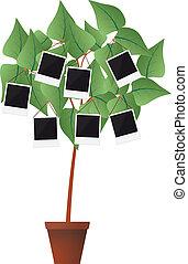porte-photo, plante