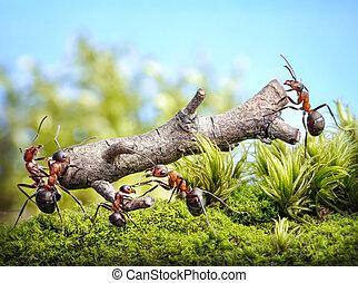 porter, bûche, collaboration, fourmis, équipe