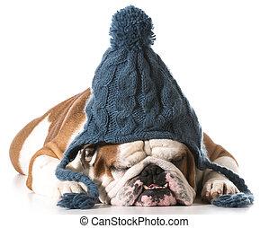 porter, chapeau, chien, hiver