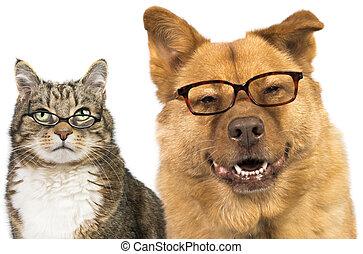 porter, chat, chien, lunettes