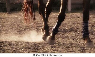 porter, cheval, pansements, jambe