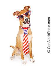 porter, chien, américain, patriotique, cravate, lunettes