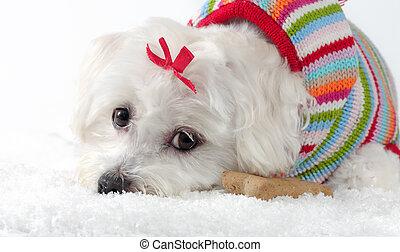 porter, chien, neige, tricoté, chiot, mensonge, cavalier