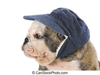 porter, chiot, chapeau, hiver