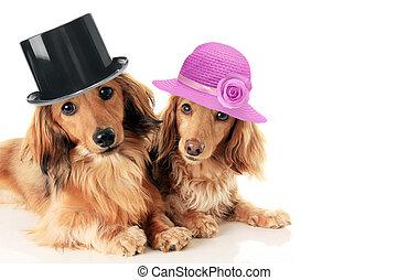 porter, couple, dachshunds, hat.