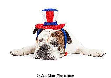 porter, fatigué, chien, américain, chapeau, célébration