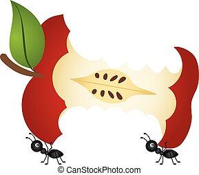 porter, fourmis, noyau, pomme