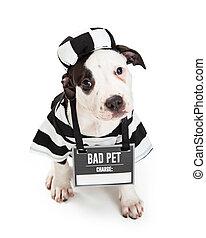 porter, halloween, chien, mauvais, déguisement, criminel