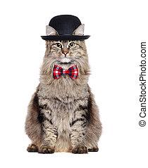 porter, joueur boules, séance, sur, isolé, chat, fond, cravate, blanc, arc, chapeau