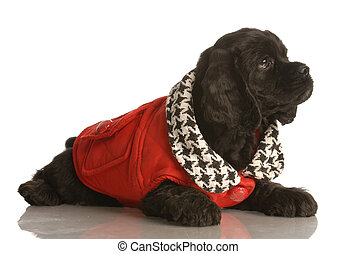 porter, manteau, chiot, hiver