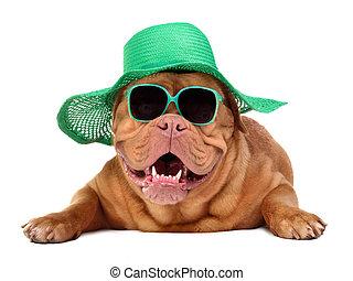 porter, paille, soleil, chien, chapeau vert, lunettes