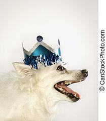 porter, papier, chien, crown.