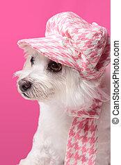 porter, pelucheux, mode, chien, hiver