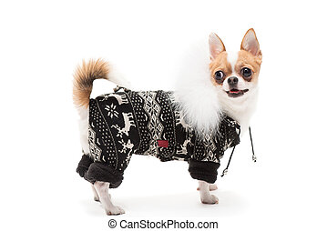 porter, rigolote, hiver, chien, équipement